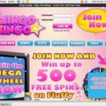 Zingo Bingo Phone